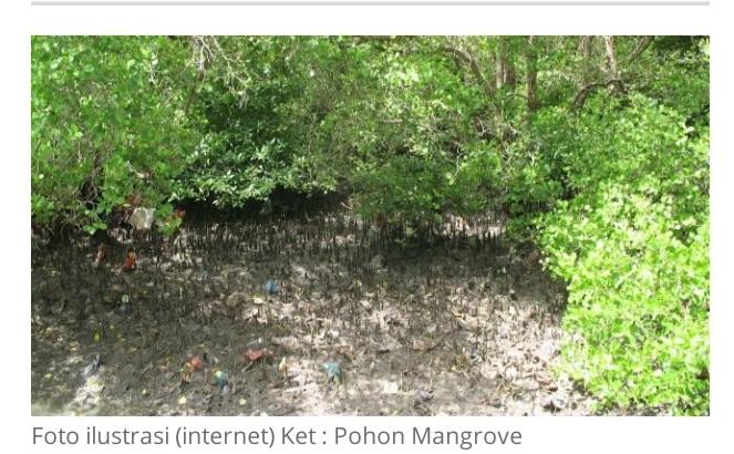 Kapan DLHK Dan Komisi III DPRD Kota Dumai Turun kelapangan Apakah Hanya Wacana Belaka